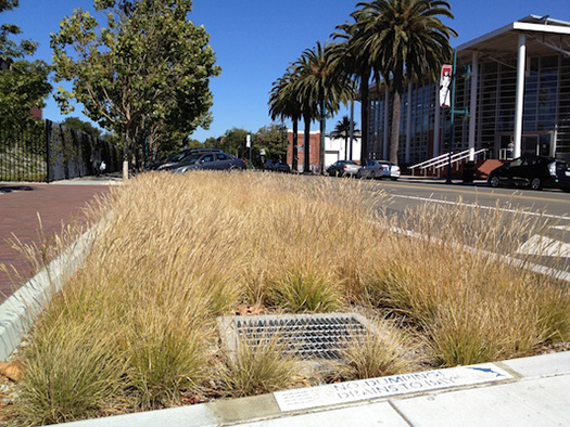 green streets bioswale new